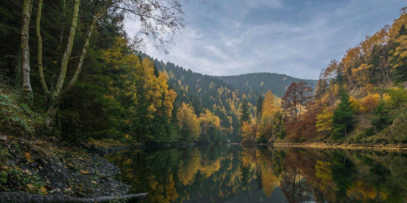 Nationalpark Harz – 96 procent skov at forsvinde i