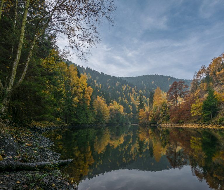 Nationalpark Harz – 96 procent skov at forsvinde i
