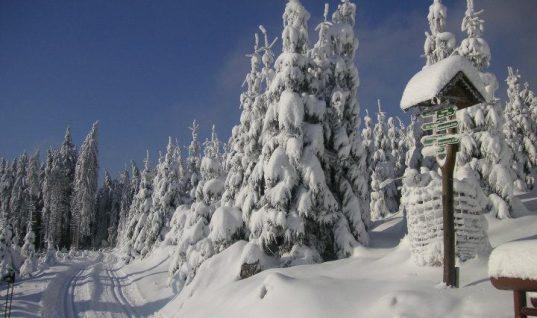 Oberhof – et oplagt sted til skisport